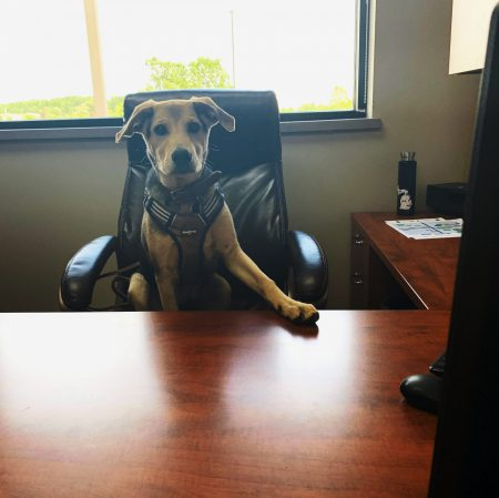 Rufus in the office